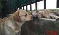Charlie e il gatto