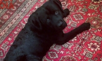 Oliver sul tappeto