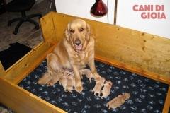 Doris con la sua cucciolata