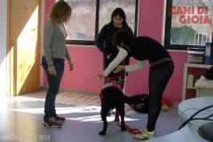 Terapia Assistita dal Cane (Mistral)